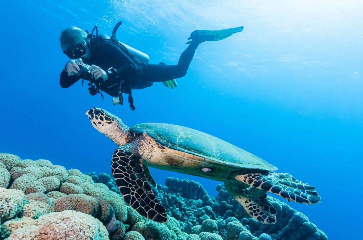Open Water to Divemaster, Koh Chang, Thailand