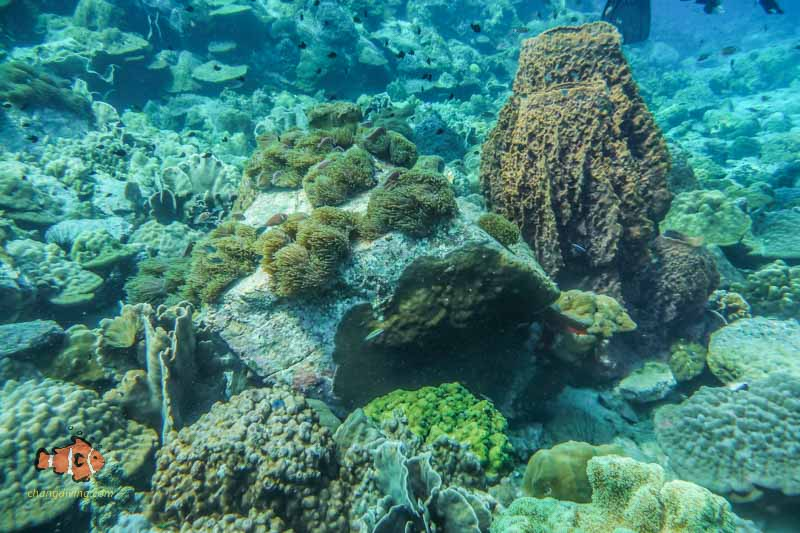 Snorkelling on the shallow reefs of koh chang
