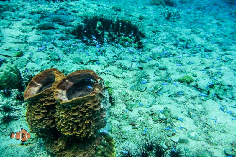 Explore Discover Scuba at koh Chang