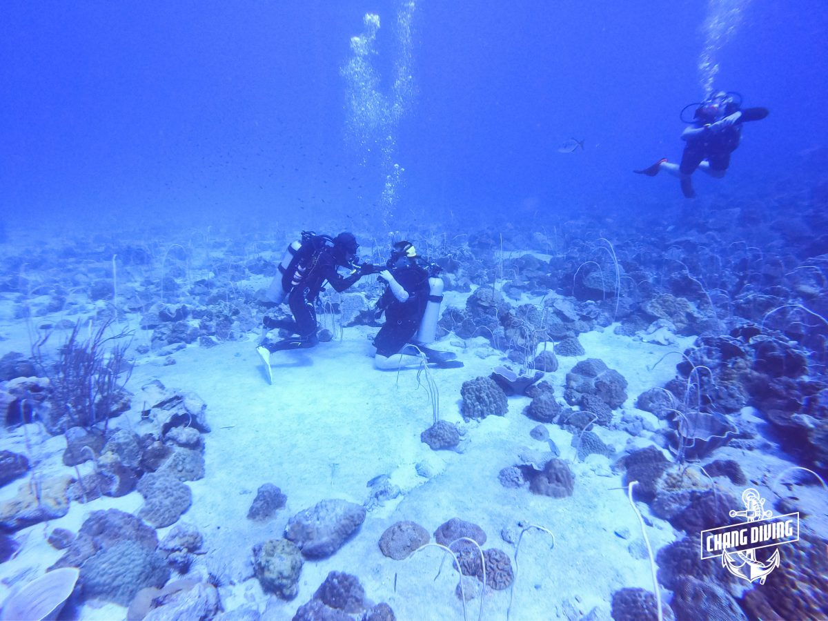 Try Diving at Koh Chang